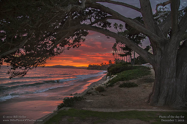 Sunset under the Cypress Tree at Butterfly Beach