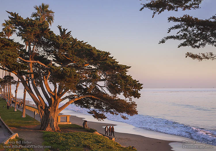 Cypress Tree at Sunset on Butterfly Beach